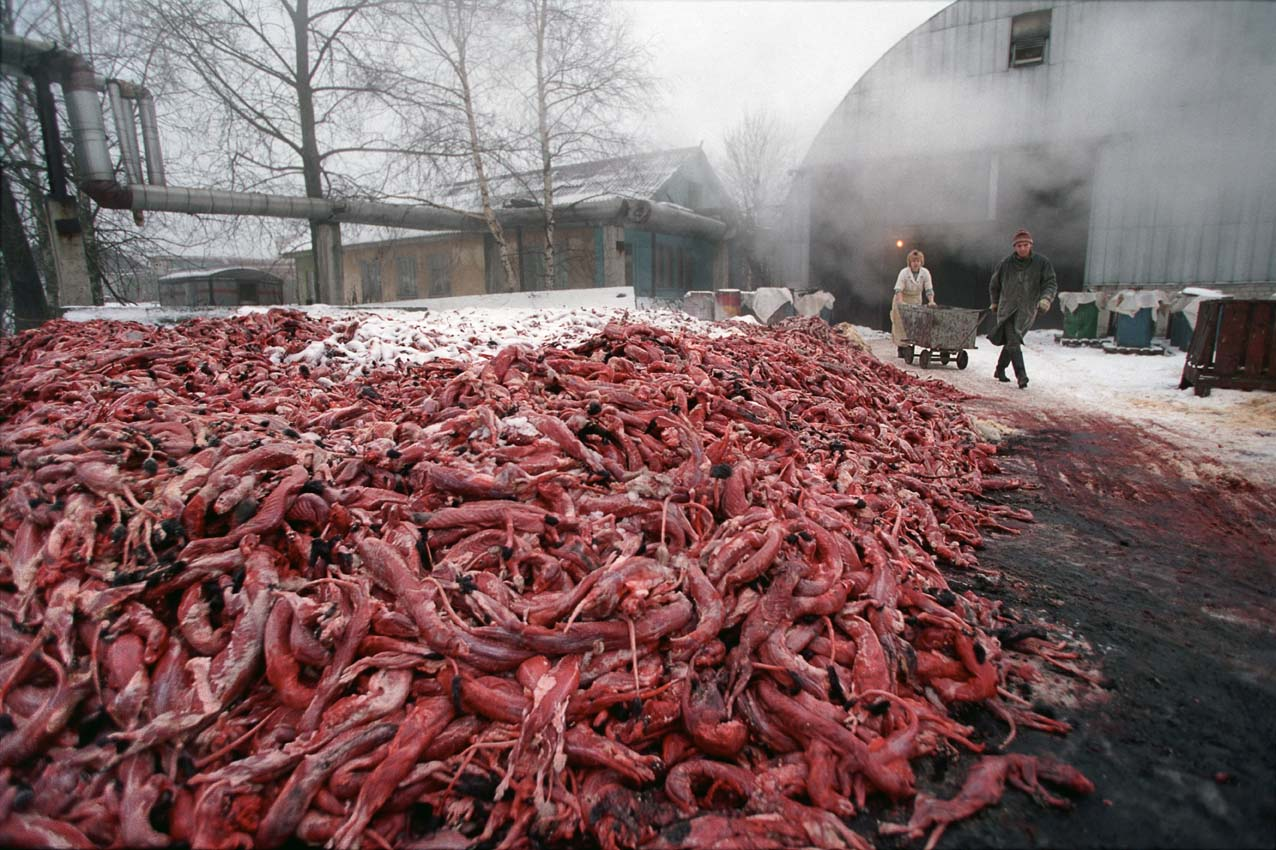 http://mynonleatherlife.com/wp-content/uploads/2013/05/92313-fur_carcasses_sergey_maximishin2.jpg